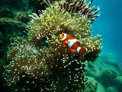 Exemple aquariophilie n°1 zone Hérault par Jerome