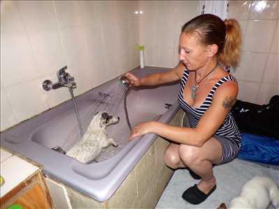 Exemple garde d'animaux n°105 zone Bas Rhin par Sophie