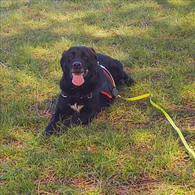Photo éducateur canin n°128 zone Yvelines par Cani'Friends
