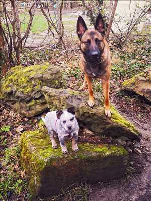 Exemple éducateur canin n°129 zone Yvelines par Cani'Friends