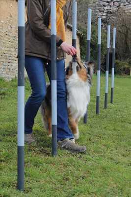 Photo éducateur canin n°134 à Dijon par fanny