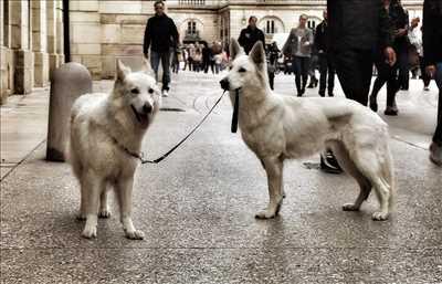 Exemple éducateur canin n°137 zone Côte-d'Or par fanny