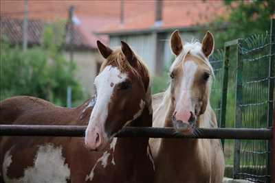 Photo élevage animaux n°204 zone Haute-Marne par Elevage du Vieux Der