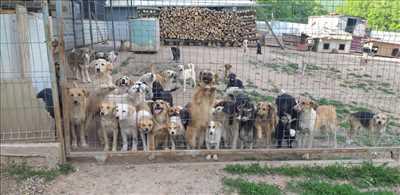 Photo refuge animaux n°259 dans le département 84 par Vanessa