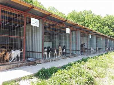 Photo refuge animaux n°260 zone Vaucluse par Vanessa