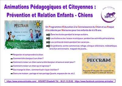 Exemple éducateur canin n°269 zone Essonne par AMES ANIMALES EDUCATION ET BIEN-ETRE
