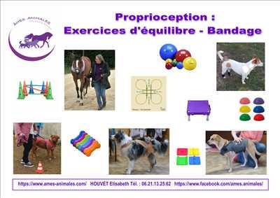 Photo éducateur canin n°271 dans le département 91 par AMES ANIMALES EDUCATION ET BIEN-ETRE