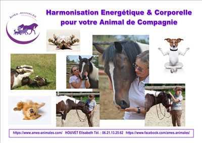 Photo éducateur canin n°272 zone Essonne par AMES ANIMALES EDUCATION ET BIEN-ETRE