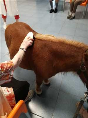 Photo médiation animale n°279 dans le département 44 par Korydwen