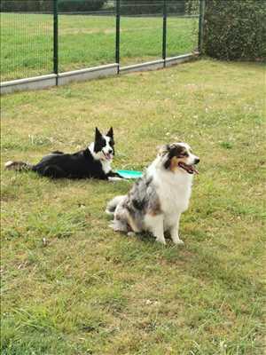Photo garde d'animaux n°294 à Sèvremoine par Auberge canine l'éden animal