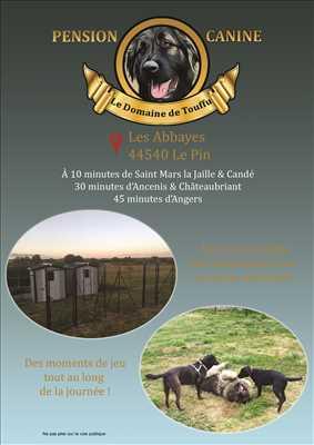 Photo garde d'animaux n°302 à Châteaubriant par Bastien