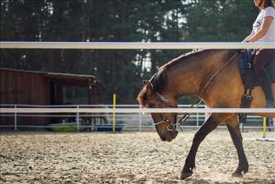Photo centre equestre n°4 zone Bouches-du-Rhône par Les Arnelles