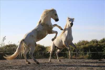 Exemple centre equestre n°5 zone Bouches-du-Rhône par Les Arnelles