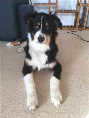 Exemple éducateur canin n°85 zone Loir-et-Cher par Keen Dog éducation canine