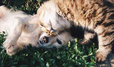 Exemple refuge animaux n°9 zone Gard par Déclic Animal